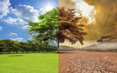 2019 el año más caluroso de Europa y el segundo más cálido a nivel mundial
